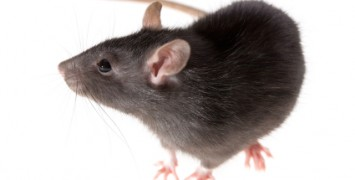 commercial pests control services in brooklyn, queens, and surrounds areas