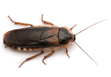cockroach pest control service in ny